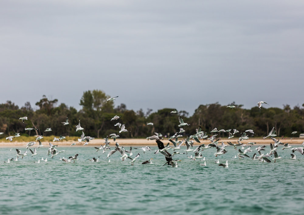 25_Mornington Peninsula