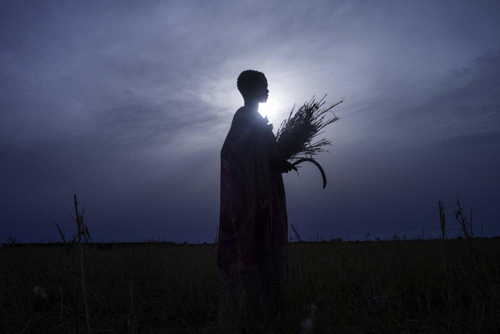 Combatting the famine crisis
