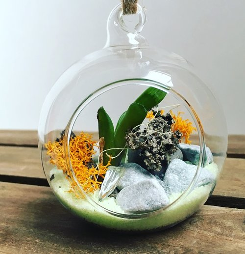 Small Hanging Sitting Globe Terrarium The Plant Place
