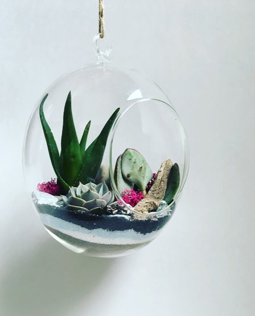 Large Oval Hanging Terrarium The Plant Place