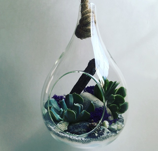 Large Hanging Teardrop W Rope Terrarium The Plant Place