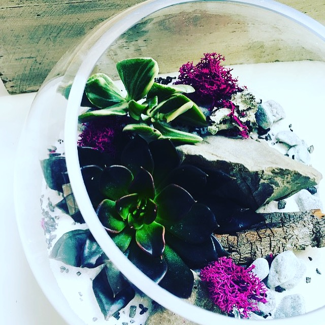 BOOK YOUR PARTY TODAY! - $45 +gst per person minimum of 8 people Includes:Step by Step demonstration on how to make your own TerrariumTwo 2 inch succulents (more plants will be available for purchase of $4 each)One empty glass container (see photo below) Unlimited choice of sand (10 colour variations), rocks, soil, moss, and driftwood to choose fromCare Instructions and an Eyedropper to water your plantsFree Host/Hostess Gift