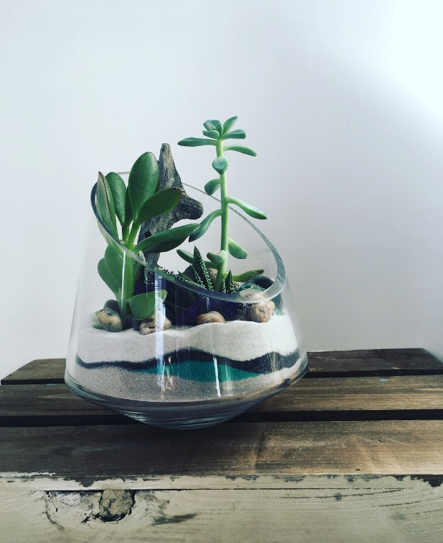 Medium Angled Vase Terrarium The Plant Place