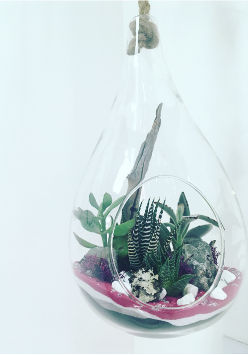 Xxl Hanging Teardrop W Rope Terrarium The Plant Place