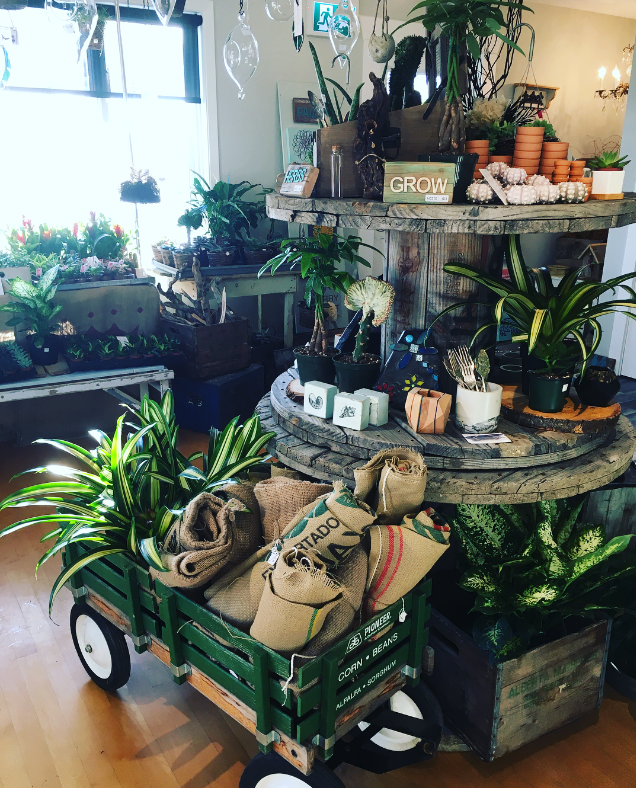 OUR NEW CHAPTER - ALMOST A YEAR AGO WE BEGAN THE LONG JOURNEY OF OPENING A STOREFRONT FOR PLANTED ROCKS IN COCHRANE, AB! OUR STOREFRONT IS CALLED THE PLANT PLACE!WE ENVISIONED A PLACE FILLED WITH PLANTS, SO MANY PLANTS (CAN YOU EVER HAVE TOO MANY…REALLY?!) - AND OF COURSE ALL THOSE THINGS THAT GO WITH YOUR BEAUTIFUL INDOOR PLANTS WE ALL LOVE (POTS / GLASS VASES / SOIL / TERRARIUM SUPPLIES / PLANTING SUPPLIES / … THE LIST GOES ON)!AND BECAUSE NOT ALL PEOPLE ARE AS OBSESSED WITH PLANTS LIKE WE ARE - WE WILL ALSO BE STOCKING OUR BEAUTIFUL STORE WITH THE MOST AMAZING HAND MADE ITEMS MADE BY LOCAL ARTISANS !!HAND MADE PRODUCTS - THE PERFECT GIFT ITEMS - AND PLANTS ! HOW CAN IT EVEN GET MUCH BETTER THEN THAT!!SUBSCRIBE WITH YOUR EMAIL AT THE BOTTOM OF THE PAGE TO GET THE MOST UP TO DATE INFO AND TO BE ADDED TO OUR NEWSLETTER!!COME VISIT US!324 3RD STREET WESTCOCHRANE, AB