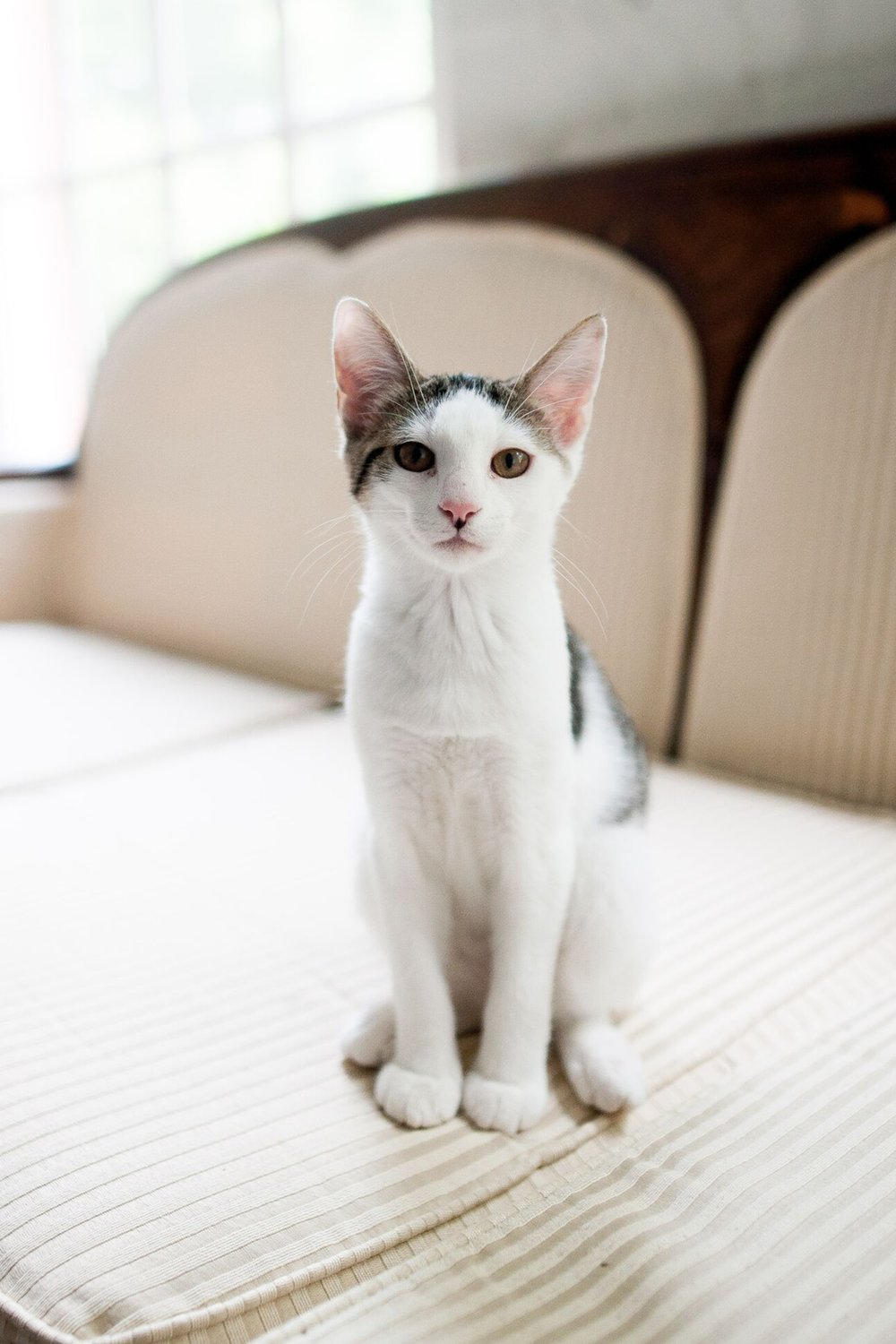 Preparing for a visit to the vet - Click the link below to read about some useful tips on preparing for the vet in a way that reduces fear, anxiety and stress in your feline friend.http://www.haveweseenyourcatlately.com/Visiting_Your_Vet.html