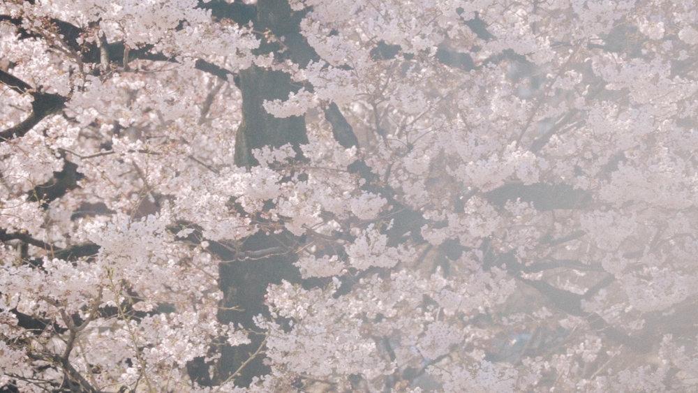 Rikkyo_Spring_th5.jpg