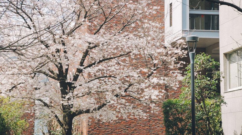 Rikkyo_Spring_th7.jpg