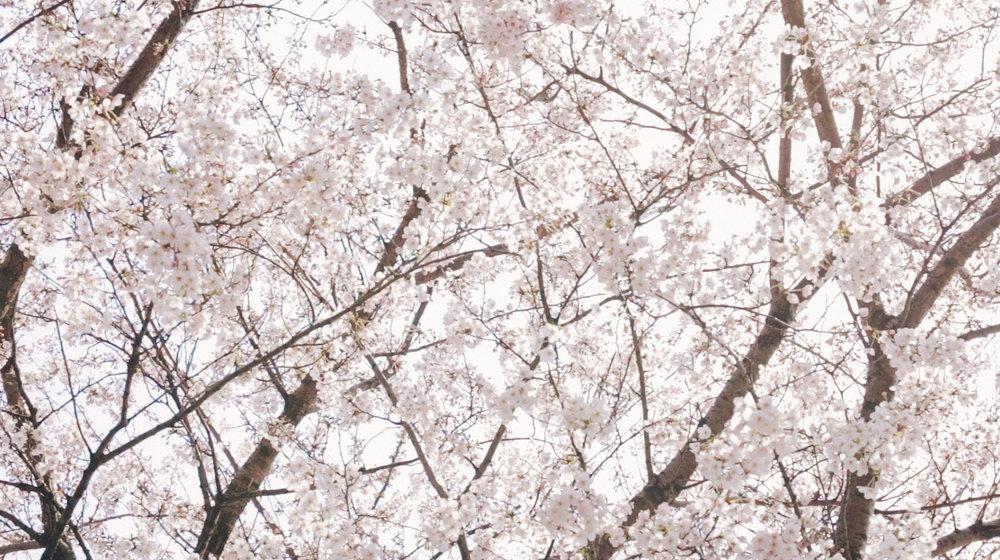 Rikkyo_Spring_th4.jpg