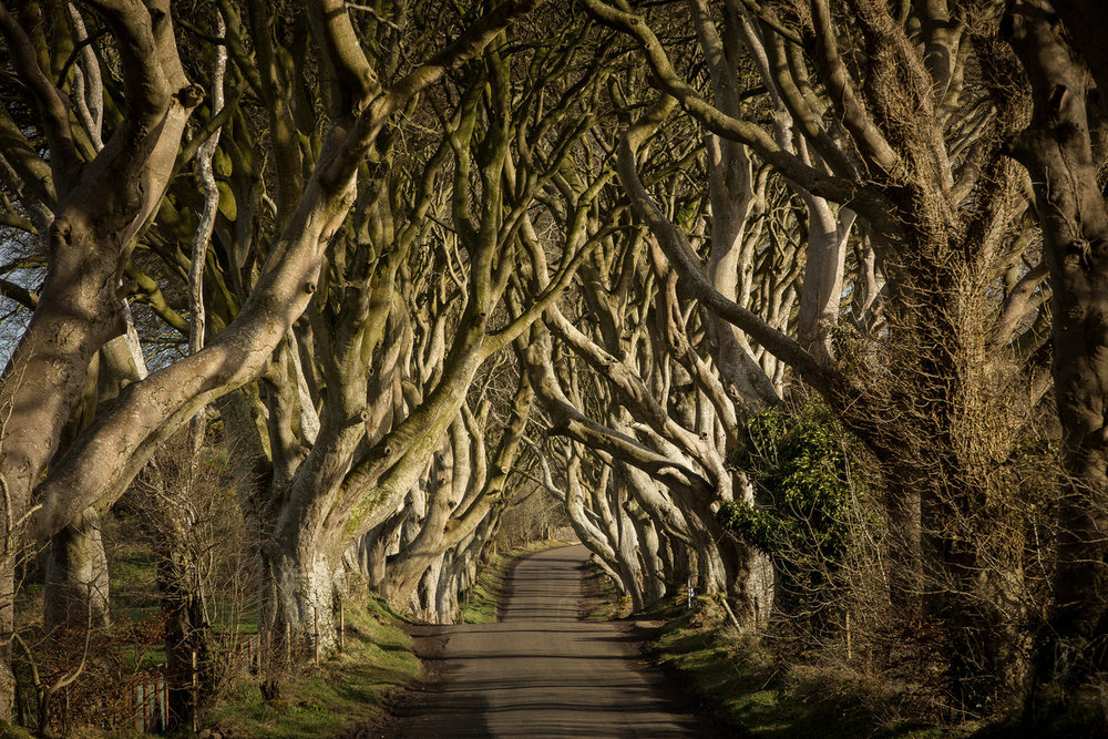 25943_The_Dark_Hedges[2].jpg