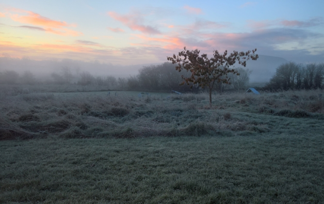 Frosty morning on the agility course.
