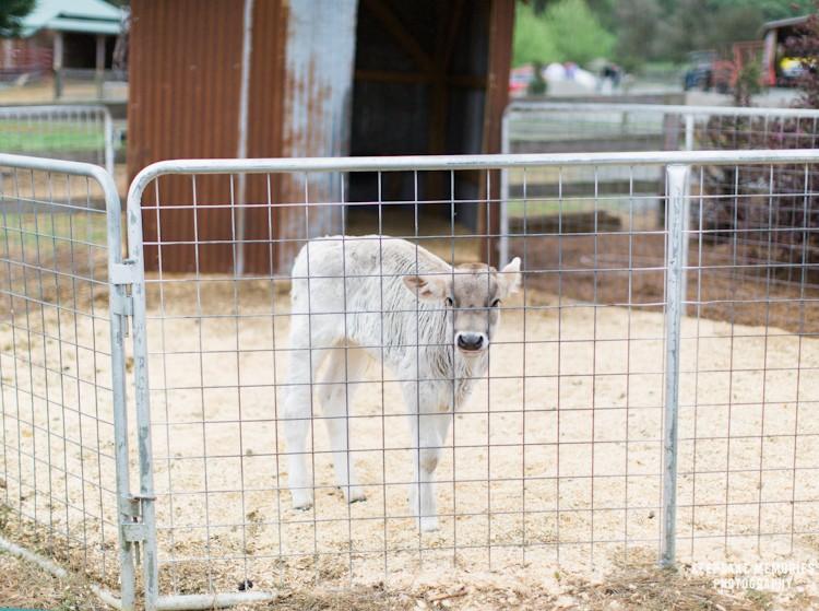 the-barn-at-woodlake-meadow-nc-wedding-photographers-2.jpg