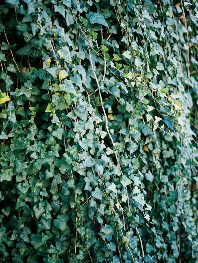 nature-photography-north-carolina-flowers-gardens-2-min.jpg