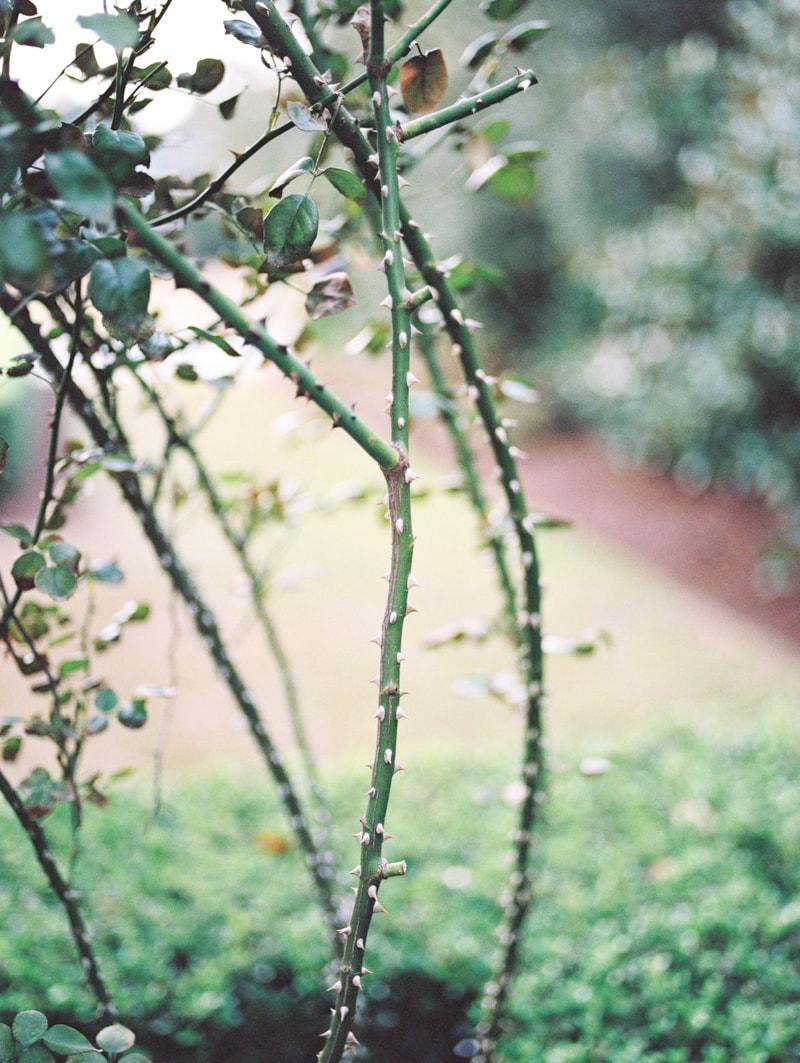 nature-photography-north-carolina-flowers-gardens-4-min.jpg