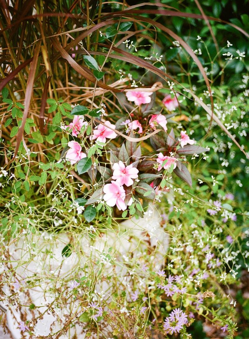 nature-photography-north-carolina-flowers-gardens-6-min.jpg