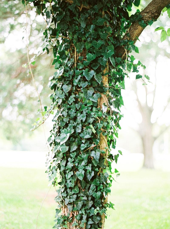 nature-photography-north-carolina-flowers-gardens-9-min.jpg