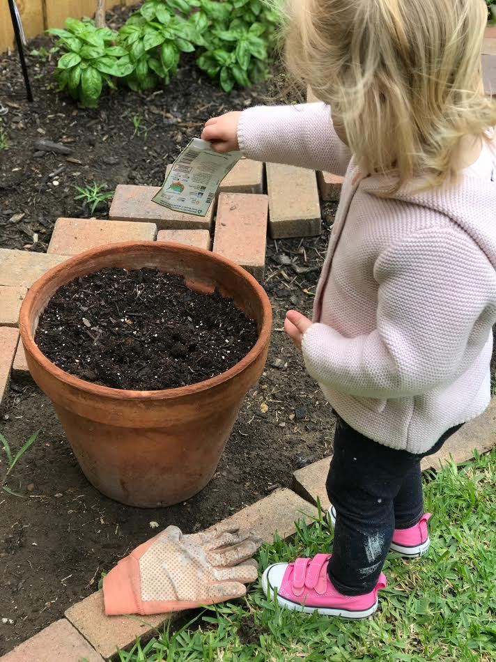 Planting carrots in a pot again this year