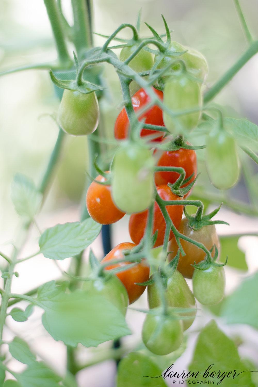 garden (7 of 8).jpg