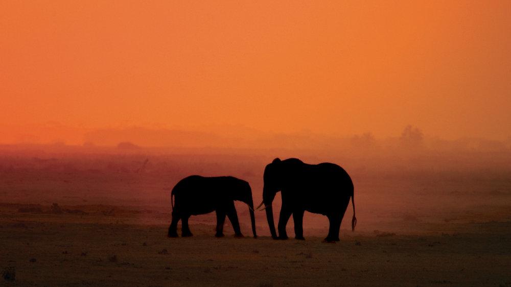 Wildlife  Diinesh Kumble