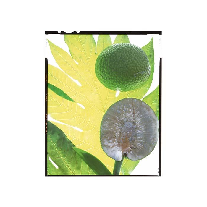 breadfruitsaba001.jpg