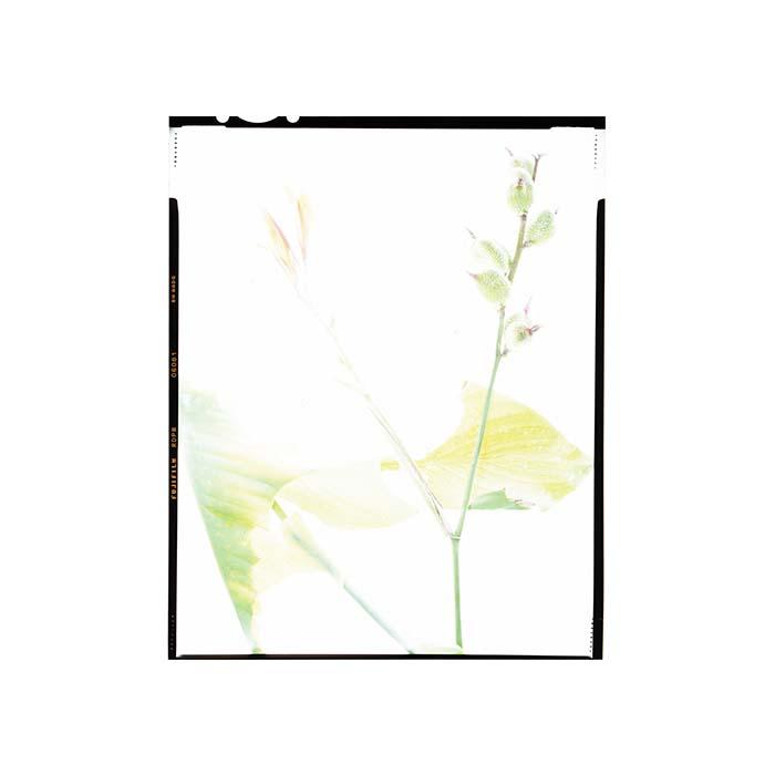 indianplantsaba020.jpg