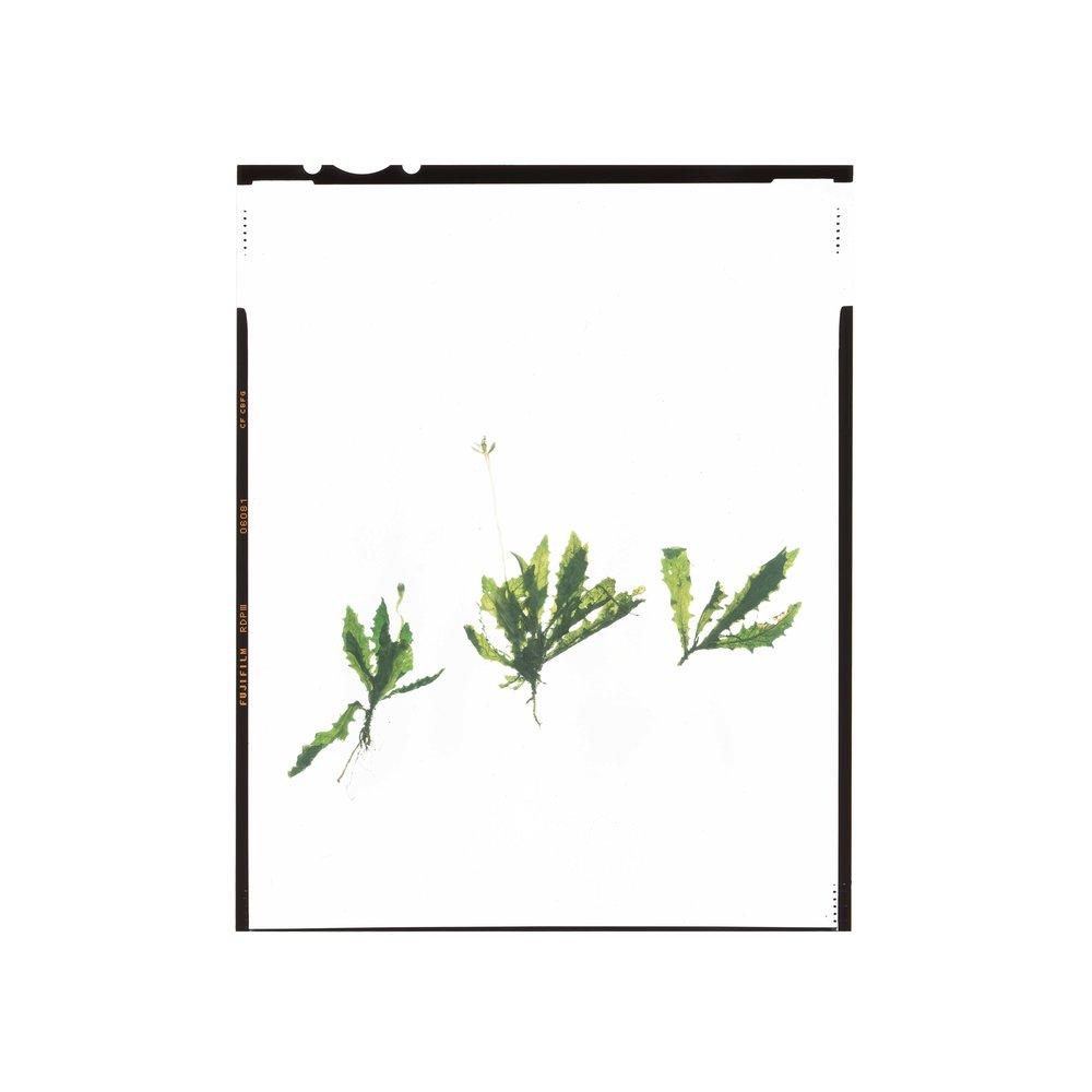 succulentsaba019.jpg