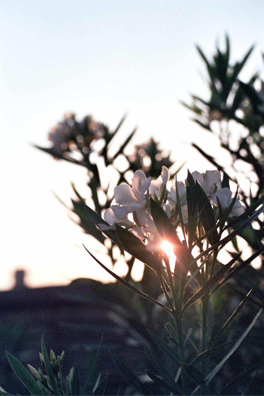 HHCharleston2012-0289.jpg