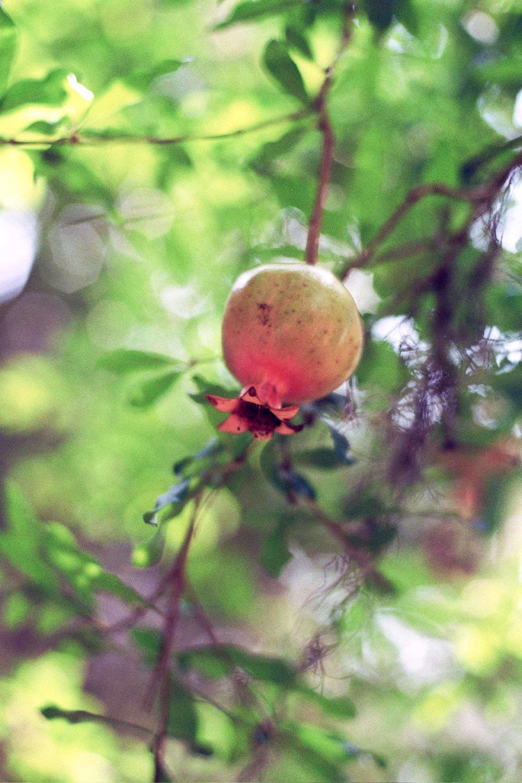 HHCharleston2012-0356.jpg