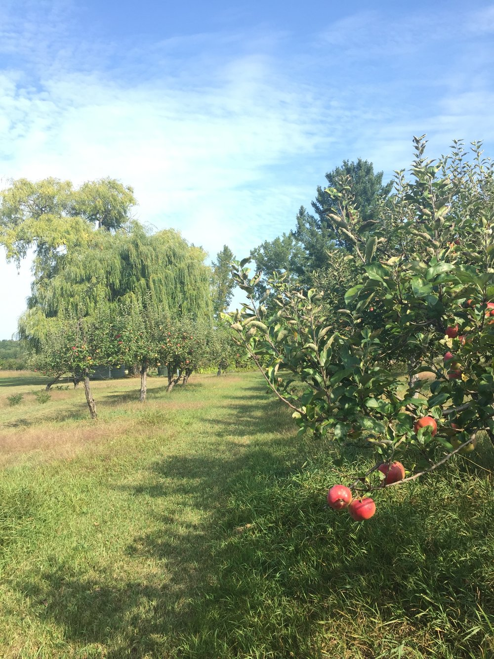 Our orchard at harvest time.