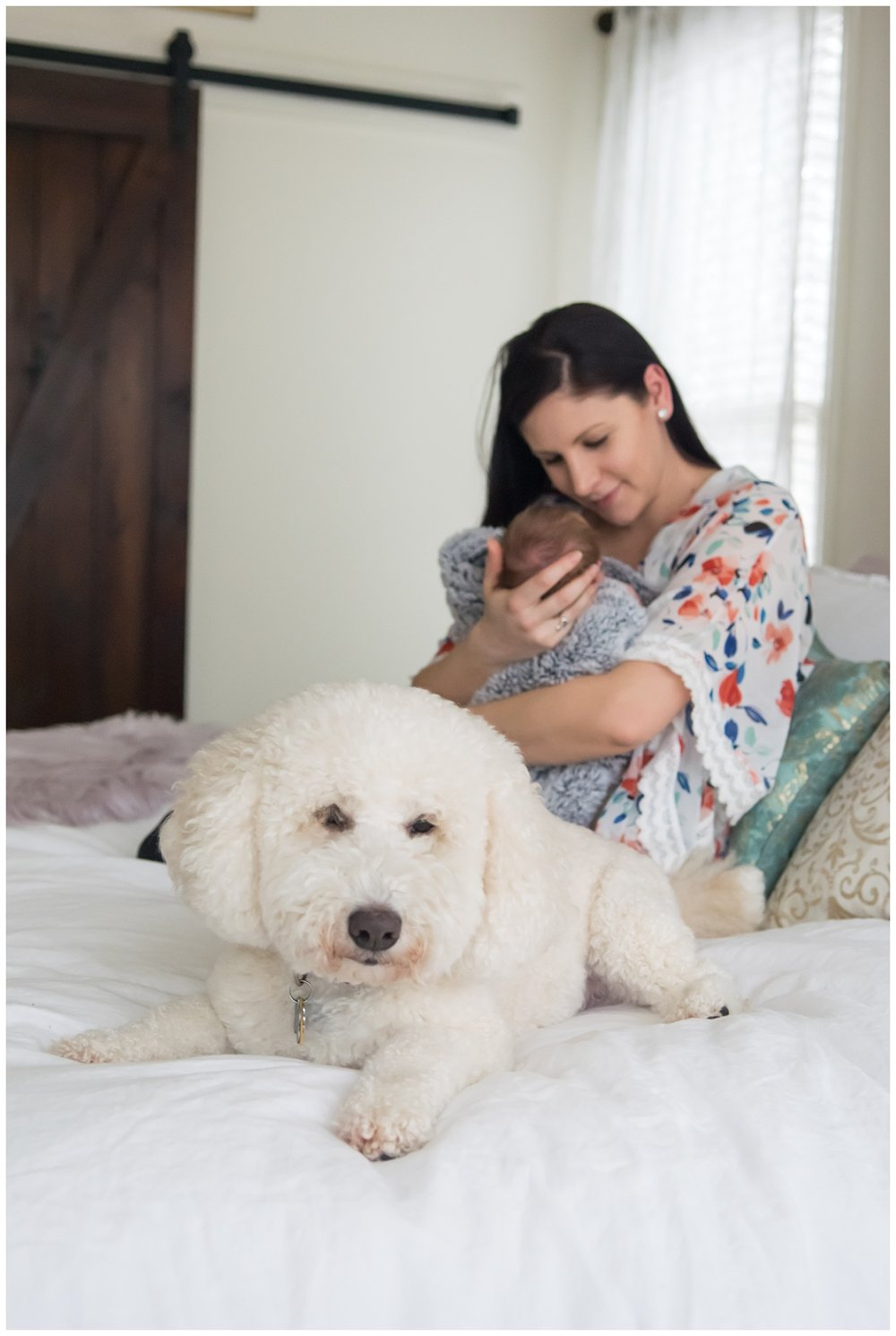 these images were taken in atlanta, georgia during an in home lifestyle newborn session. the focus is on the family dog and mom is holding the newborn baby girl in the background of the photo.