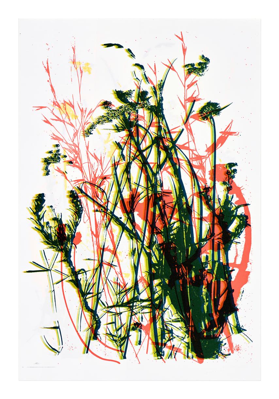 Leaves of Grass, Berkeley Weeds (2 of 13) - 2017