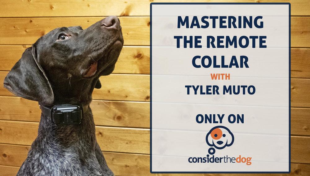 Photo C/O Tyler Muto & Consider The Dog
