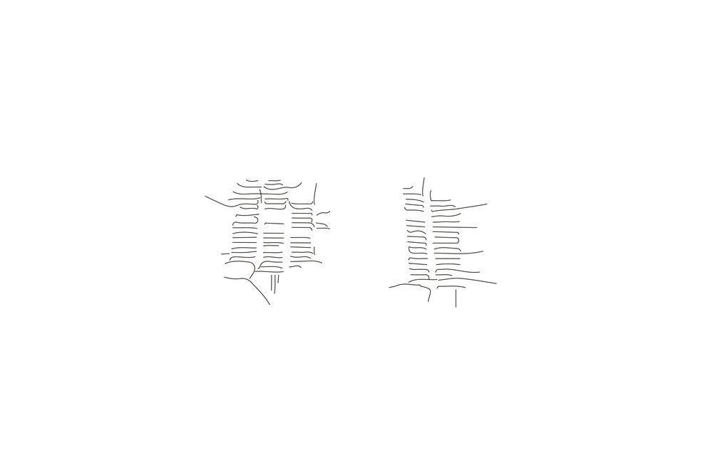 autogenerativo 2-2.jpg