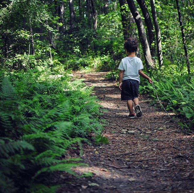 Taking a stroll through the ferns on this lovely Saturday! 🌿🌿⠀⠀⠀⠀⠀⠀⠀⠀⠀ +⠀⠀⠀⠀⠀⠀⠀⠀⠀ +⠀⠀⠀⠀⠀⠀⠀⠀⠀ +⠀⠀⠀⠀⠀⠀⠀⠀⠀ #charlie #hike #explore #delaware #ferns #familytrails #outdoors #nature #childhood #candidchildhood #childhoodunplugged #momswithcameras #mom_hub #runwildmychild #jj_its_kids #childofig #simplychildren #pixel_kids #momtogs #cameramama #getoutside #stillaboy #boy #sunlightisthebestfilter #takeahike #wanderer #stroll #outsidefun #mommasboy #mommyandme