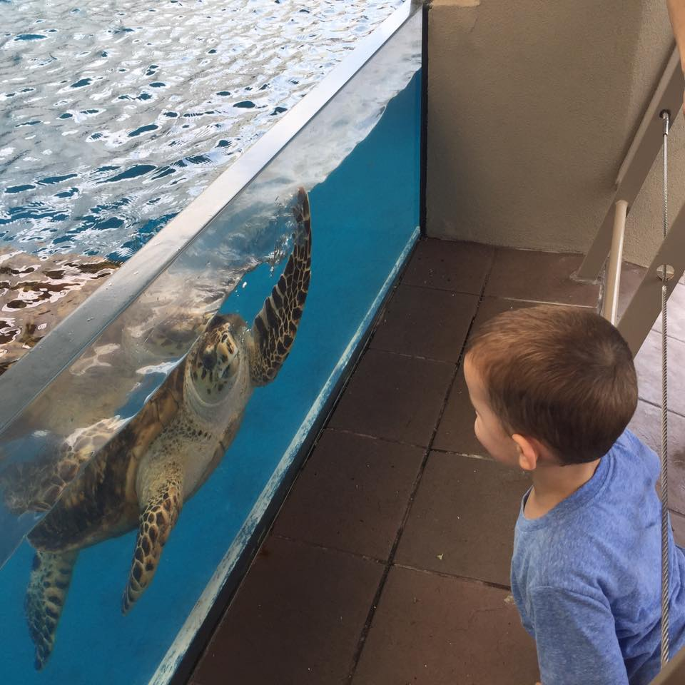 little boy watching sea turtle