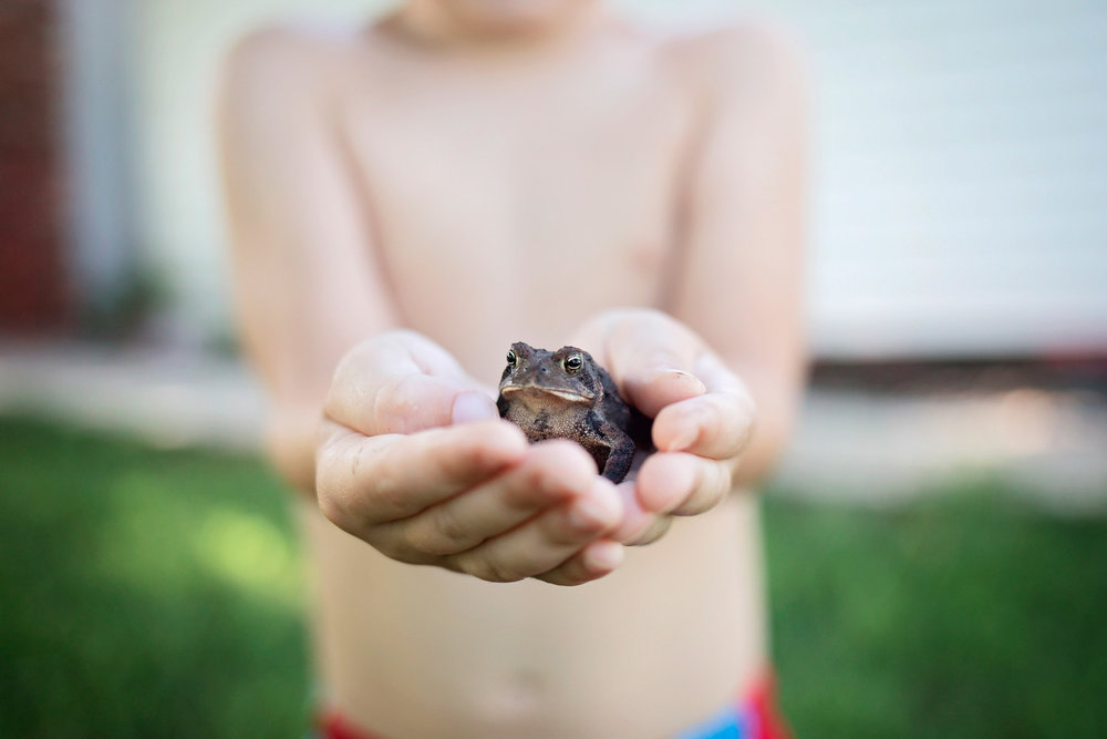 Little boy holding a frog in Oklahoma City, Oklahoma.