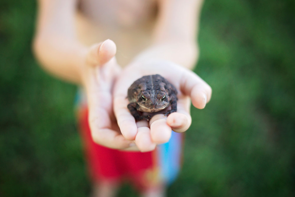 Close up of little boys hands holding a frog by Amanda Lynn Photography in Oklahoma City, Oklahoma.