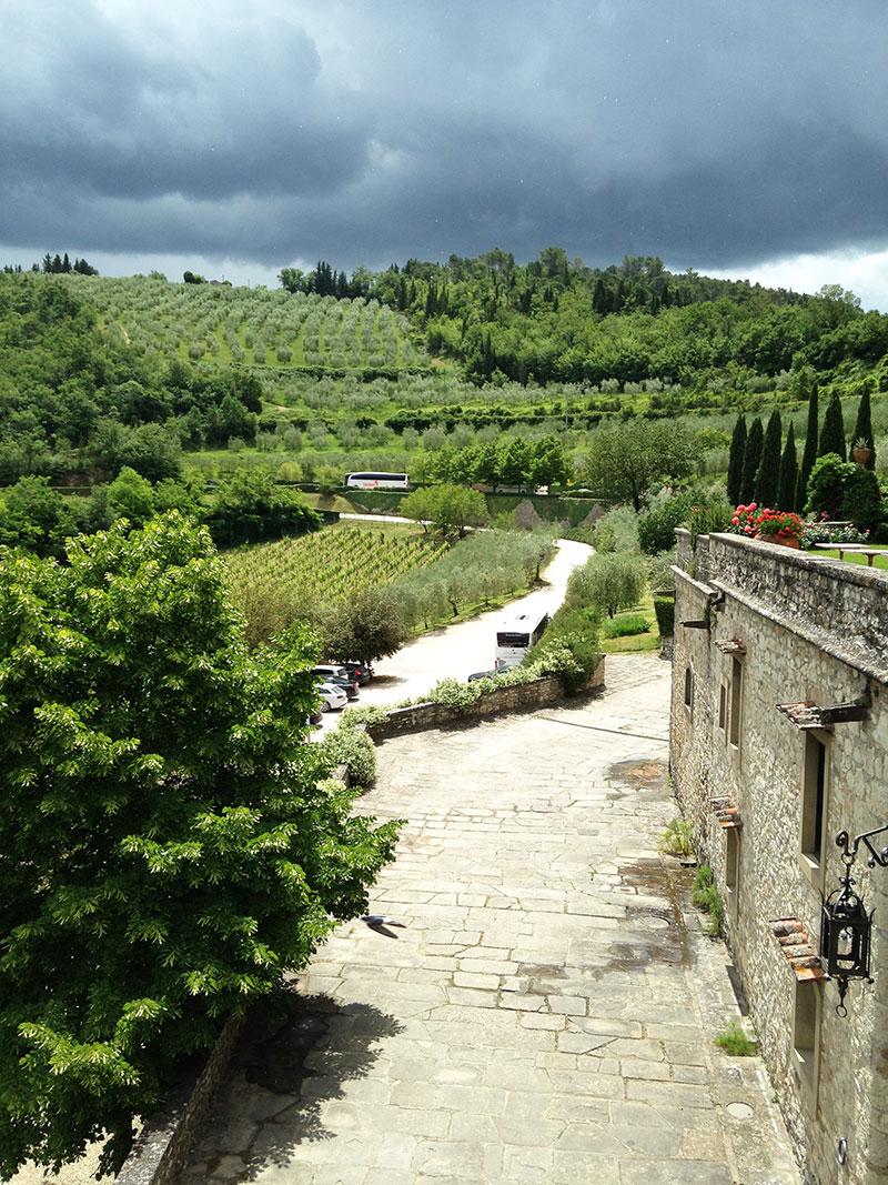 vineyard-tuscany-italy.jpg