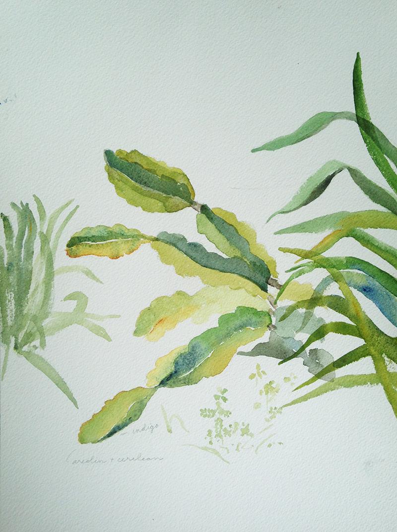 coco-connolly-watercolor-plant-life-waimea2018.jpg