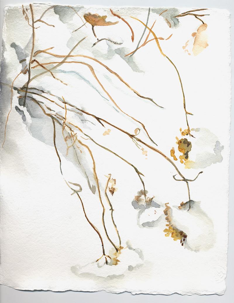 coco-connolly-hydrangea-snow-watercolor-sketch.jpg
