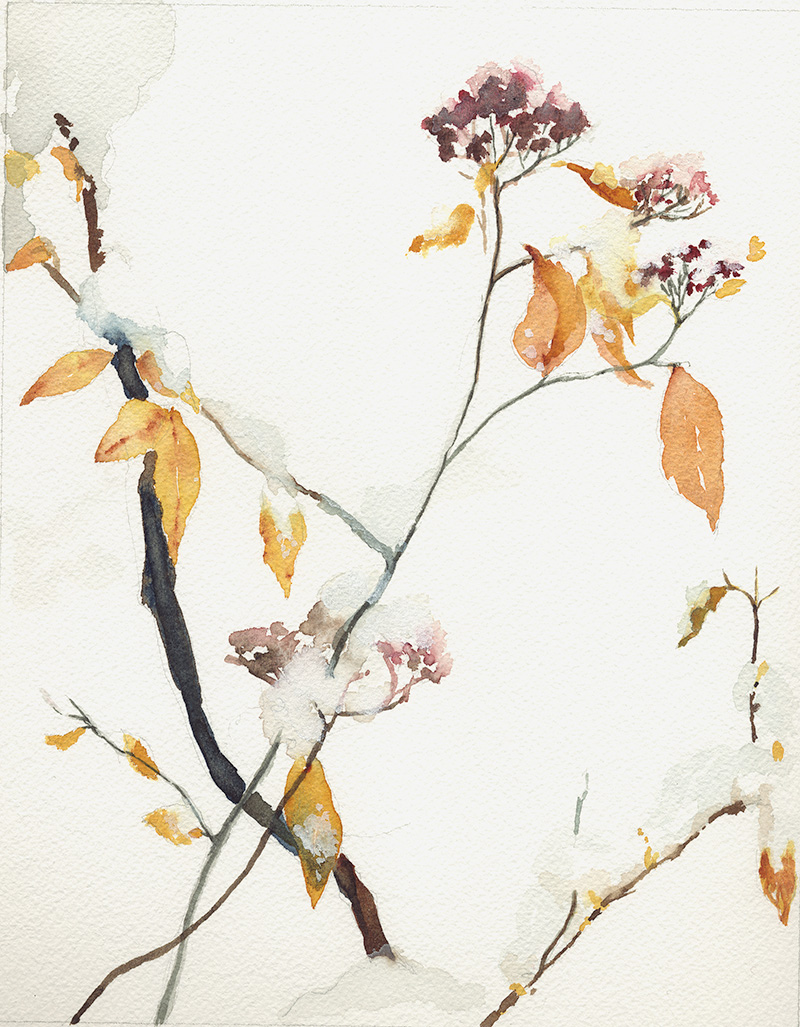 coco-connolly-yellow-leaves-snow-watercolor-sketch.jpg
