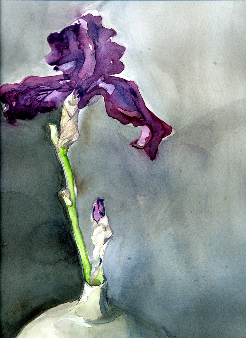 One Purple Iris : Watercolor on Arches 140# hp, 12 x 16 in / 31 x 41 cm
