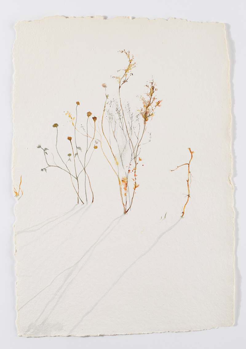 Weeds in snow 5: Watercolor on handmade paper, 12 x 18 in / 31 x 46 cm