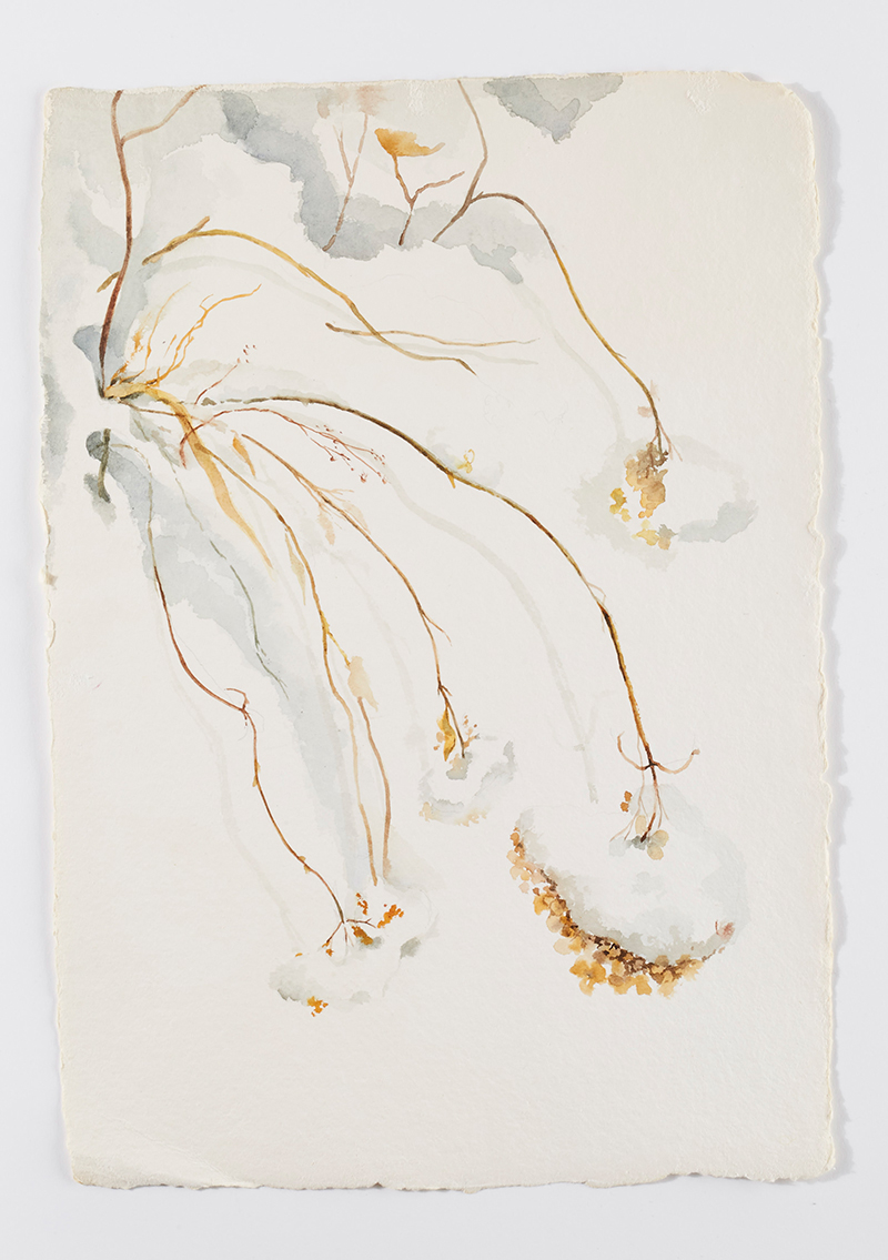 Weeds in snow 6: Watercolor on handmade paper, 12 x 18 in / 31 x 46 cm