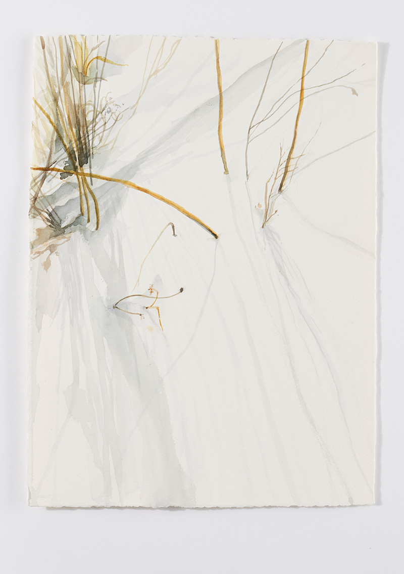 Weeds in snow 7: Watercolor on Saunders 140# cp paper, 12 x 16 in / 31 x 41 cm