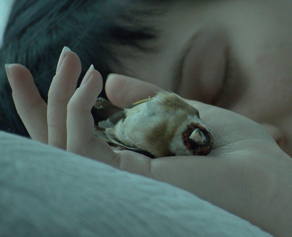 Sleeping birds (1).jpg