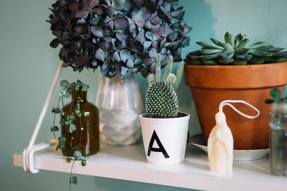 A gauche en flacon : Bouture de Ceropegia Woodii / Dans planteur blanc lettre A : Opuntia Microdaysis / Pot en terre cuite : Echeveria
