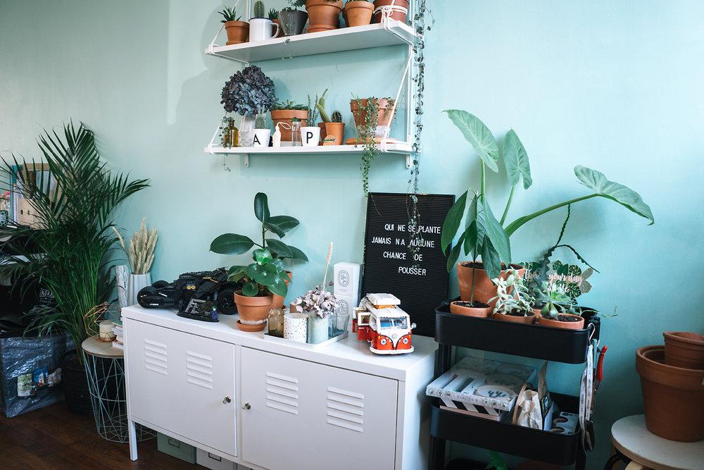 À gauche : Areca / Sur la console blanche : Ficus Elastica & Peperomia / Sur la desserte noire : Alocasia, bouture d'Avocat, Graptopetalum