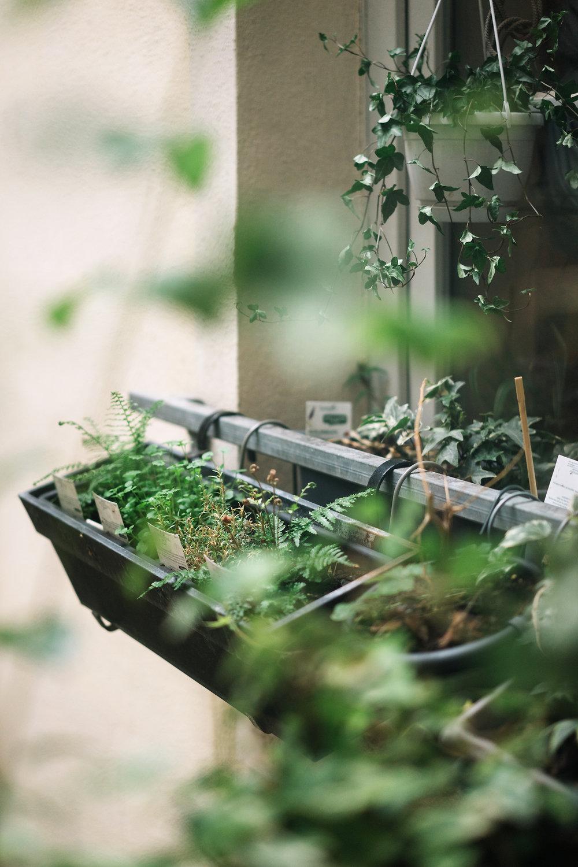 Jardinières remplie de fougères et d'aromates !