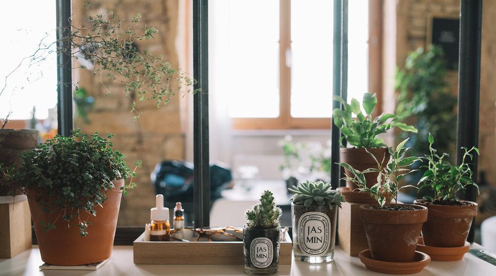 Detail de la verrière : Sophora, Pilea Glauca, Cactus, Echeveria, Asplenium & Ficus